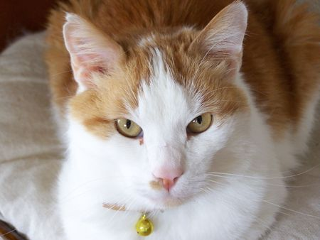 catlike: The Cat