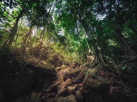 Sun light through nature forrest create mystic Atmosphere