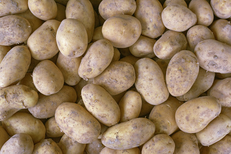 A bunch of fresh new potatoes Closeup