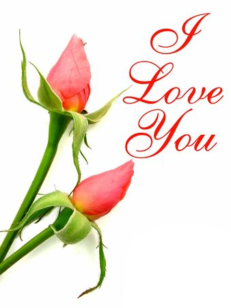 I love you wording beside two pink roses with greenery over white background.