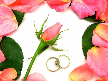A pink rose surrounded by pink rose petals and greenrose leaves, with two gold wedding ring bands over white backbround. Stock Photo