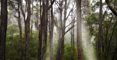 A misty forest with streams of spiritual and dreamy sunlight Stock Photo