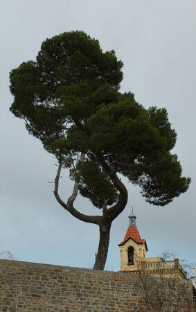 saintliness: Church Under the Tree