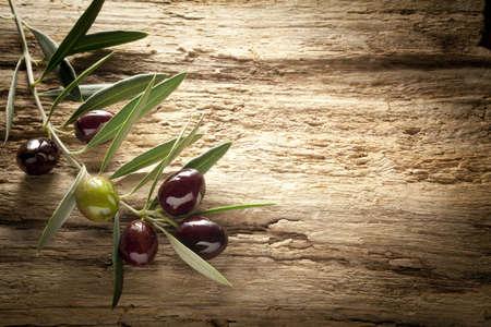 foglie ulivo: ramoscello di ulivo su vecchio olivo
