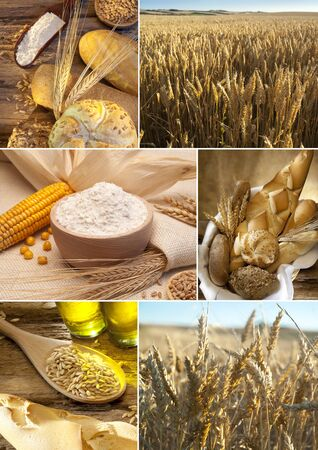 gold shovel: scenes about growing and making bread Stock Photo