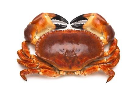 Cooked edible crab (Cancer pagurus). Stock Photo
