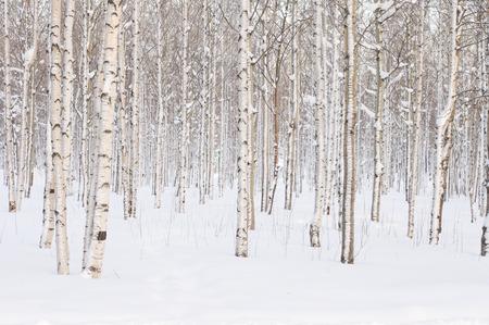 Bomen in het park of het bos in de wintersneeuw Stockfoto