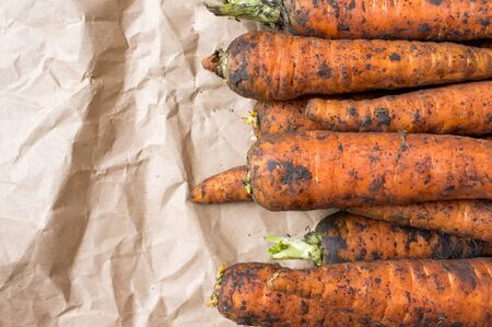 unwashed: Carrot farm fresh crop dirty, unwashed