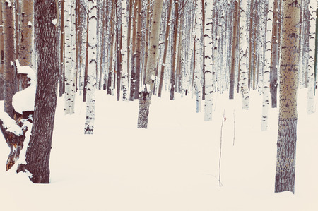 Birch and aspen in the park or in the woods in winter snow Фото со стока