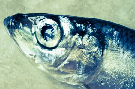 sprat: Sprat head close-up view from above Stock Photo