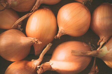 cebolla: Cebolla cosechar un montón de bombillas Opinión superior del primer Foto de archivo