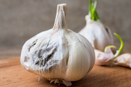 rotting: Rotting garlic head on a background of green garlic