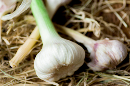bulb and stem vegetables: Fresh garlic and old garlic bulbs on an straw Stock Photo