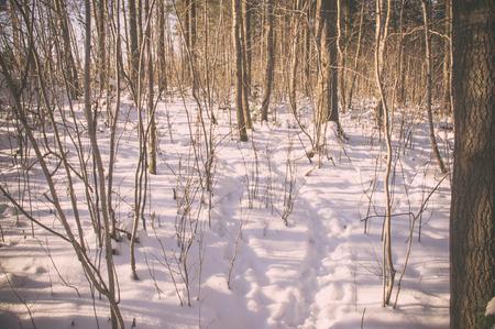 animal tracks: Animal tracks in the snow in the winter forest Archivio Fotografico