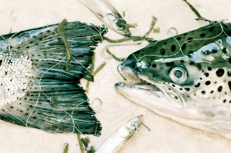 fish head: Fish head and tail fishing net wet top view Stock Photo