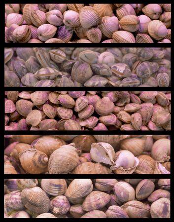 crustaceans: Background made of assortments of  mediterranean crustaceans.