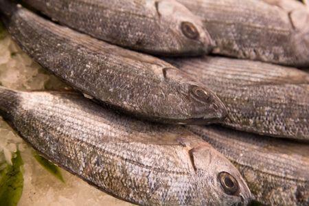 fishy: Saddled breams on ice at a fresh fish market stall.
