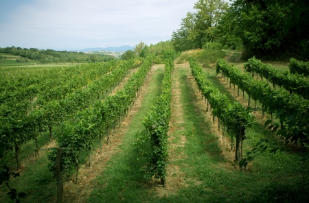 Vineyard landscape with small towns on the background in the Venetto province Italy photo