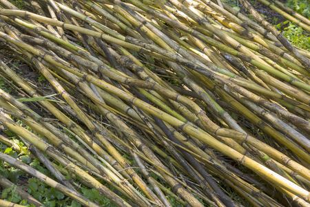 Background of bamboo stacked on the floor