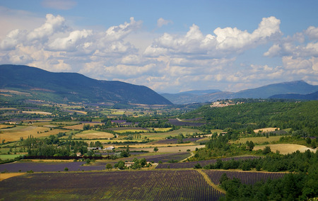 arbre: French landscape: lavender fields of Provence and the village in the distance Stock Photo