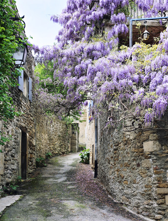 Cascade flowering wisteria on the street of French village Stock Photo