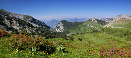 foothills: Alpine foothills: summertime, Chartreuse mountain range, flowering azaleas