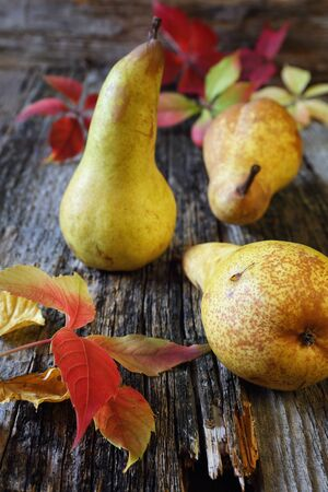sappy: Autumn composition: Three yellow pears and autumn leaves