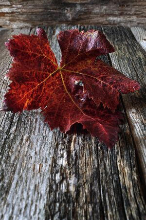 crannied: Autumn background: burgundy grape leaf on old wooden surface