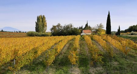 reddening: France, the Provence region: Autumn vineyard and house in Provence