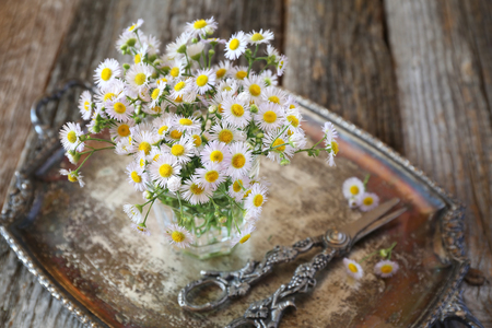 field of daisies: Bouquet of field daisies on vintage tray