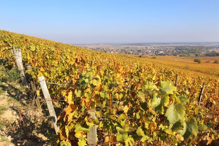 Landscape of France, the Burgundy region: autumn vineyard. Focus selective Stock Photo - 133130292