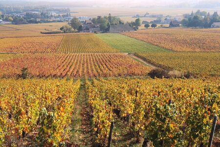 Landscape of France, the Burgundy region: autumn vineyard. Focus selective