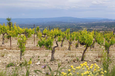 South France. Summer landscape. Mountain vineyard in Provence with cloudy sky