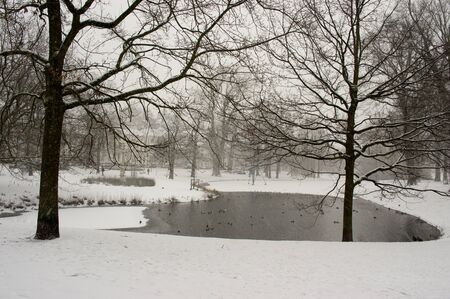 Small lake in the center of Arnhem during snowfall in the winter with many birds on the water
