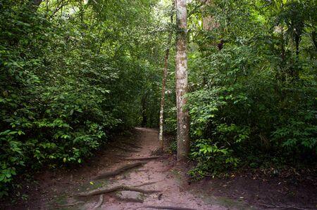 Path in the jungle of Tikal, Guatemala
