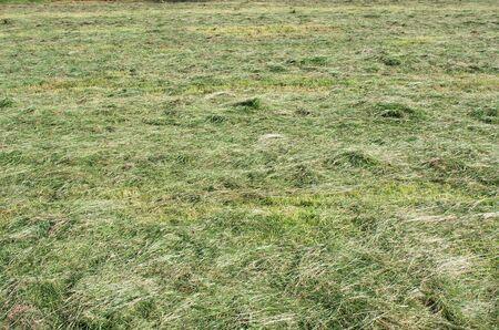 Fresh mown grass at the farm Фото со стока