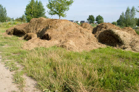 Haystack of mowed grass near a residential area in Arnhem in the Netherlands