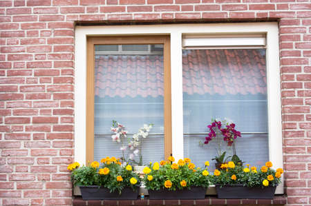 Closeup of traditional dutch window with yellow and orange flowers Stockfoto