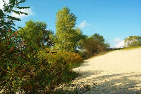 the dnieper: Autumnal Dnieper beach and locust bush. Shot near the Dnieper river, in Poltavska region, Ukraine.