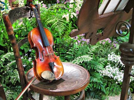 ヴァイオリン ガーデン。南アフリカ共和国で撮影します。