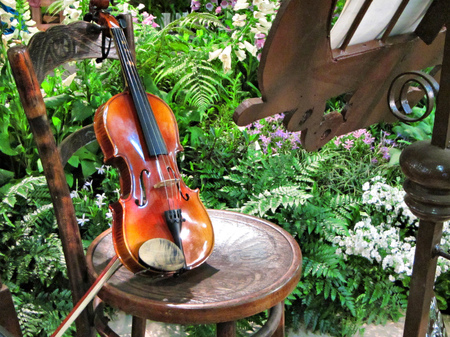 Violin in garden. Shot in South Africa. Imagens