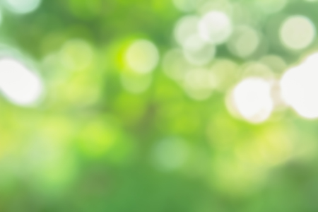 green nature bokeh background blurred