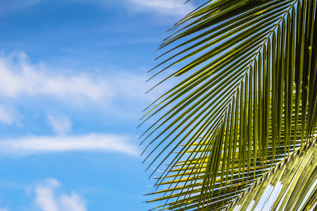 Close up coconut leaves on sky background outdoor natural backdrop abstract sty