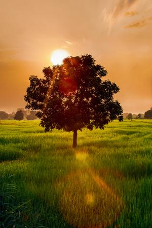 Evening landscape and golden light from the sun. Vertical