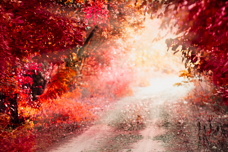 Landscape wild red. The concept of fantasy for background or poster