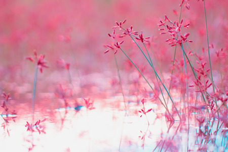 Structures of flowering grass soft blur. The background for the creation of ideas
