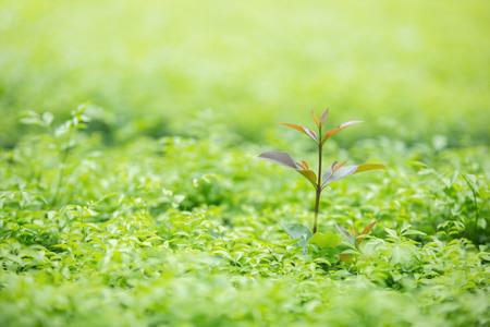 Green nature background Stock Photo - 125549183