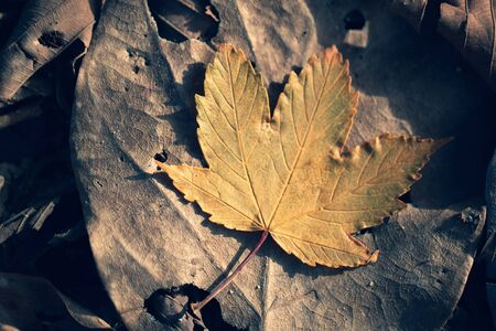 Natural dry leaf background Outdoors