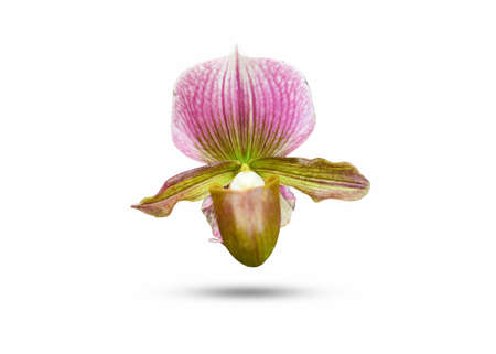 Thai orchid Flower beautiful nature close-up concept ideas Isolated on white background 写真素材
