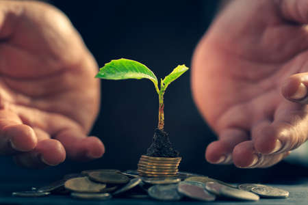 Return on investment concept and saving money for profit Seedling on a blurred natural background